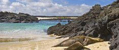 Zauber der Galapagosinseln