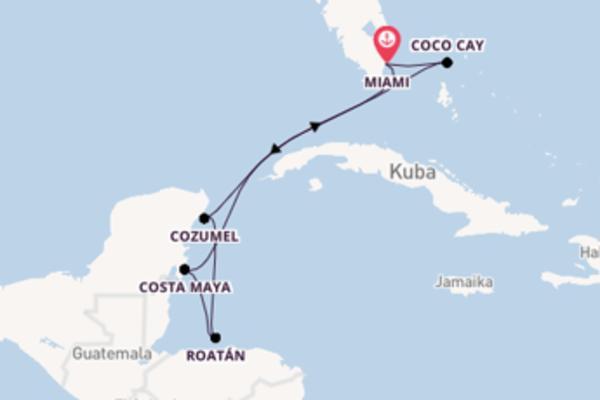 Erleben Sie 8 Tage Cozumel und Miami