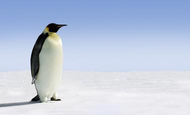 Antarctique, Amérique du Sud, Transatlantique, Amazone, Europe du Sud