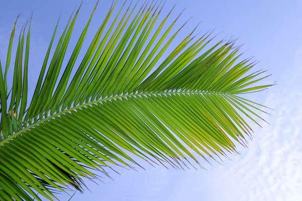 Palm Beach, Florida, Verenigde Staten