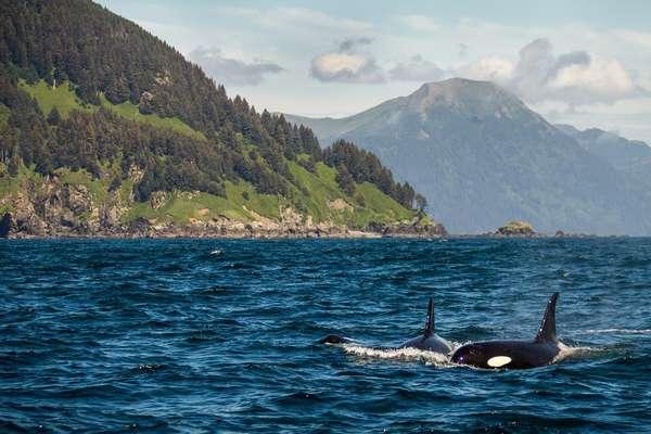 Baby Islands, Alaska