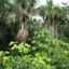 Magisches Amazonien