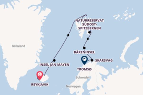 Begeisternde Kreuzfahrt über Sudereyri nach Tromsø