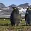 Das ewige Eis der Antarktis ab Ushuaia
