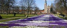 Hamburg und die Baltischen Metropolen