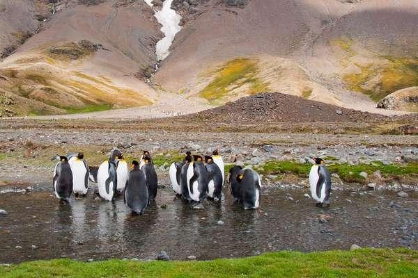 Antarktis, Falklandinseln und Südgeorgien