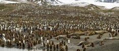 Festtage in der Antarktis und Südgeorgien
