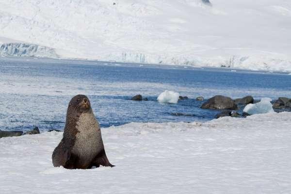 Isole Shetland Meridionali, Antartide
