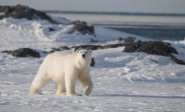 Arctique, Europe du Nord