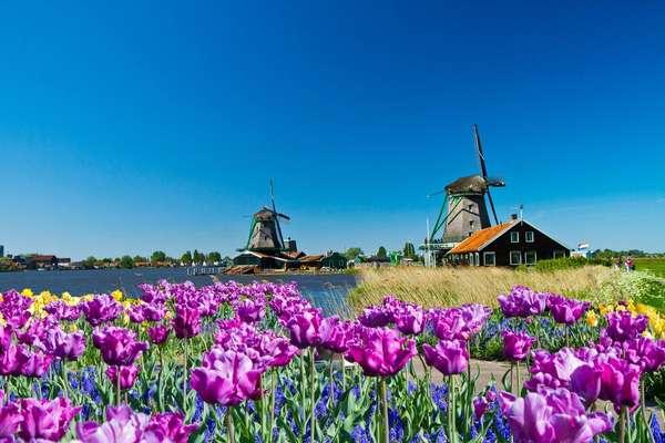 Cruising to Amsterdam from Antwerp