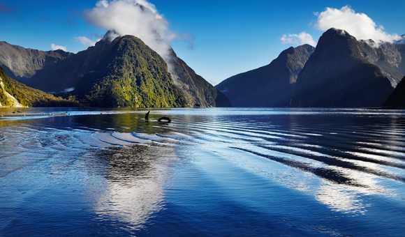 New Zealand Cruises Save Up To - Cruises to new zealand