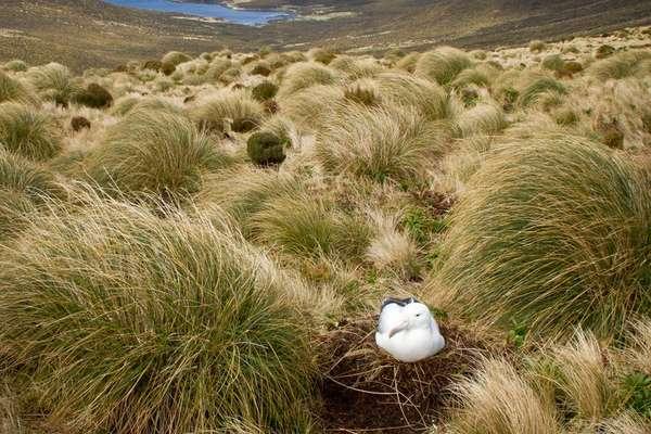 о. Кэмпбелл, Новая Зеландия