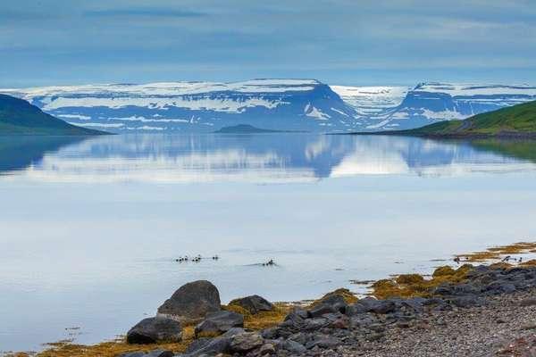 Île de Vigur, Islande