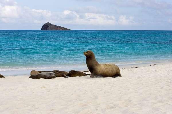 Gardner Bay (Espanola), Galapagos Islands