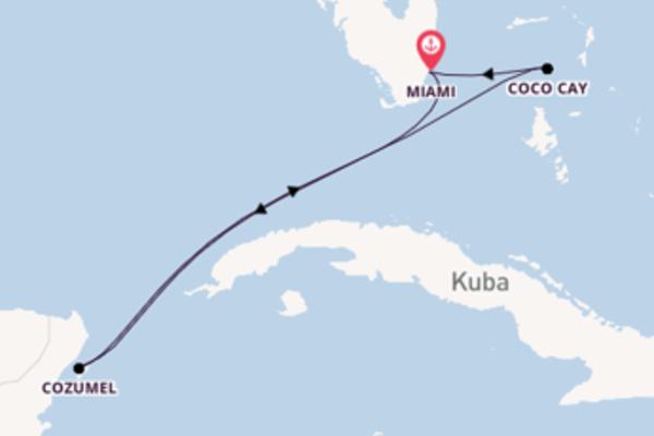 Beeindruckende Reise nach Miami