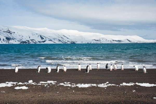 Île de Cuverville, Antarctique
