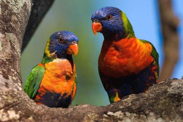 о. Пен, Новая Каледония