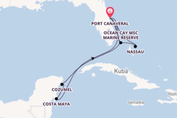Kreuzfahrt mit der MSC Divina nach Port Canaveral