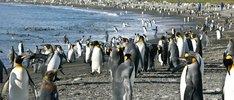 Antarktis, Falkland und Südgeorgien ab Montevideo