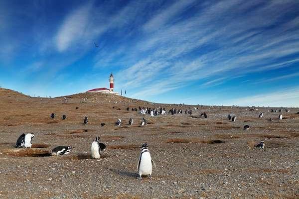 Ilha Magdalena, Chile