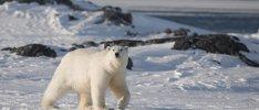 Wunder Spitzbergen erfoschen