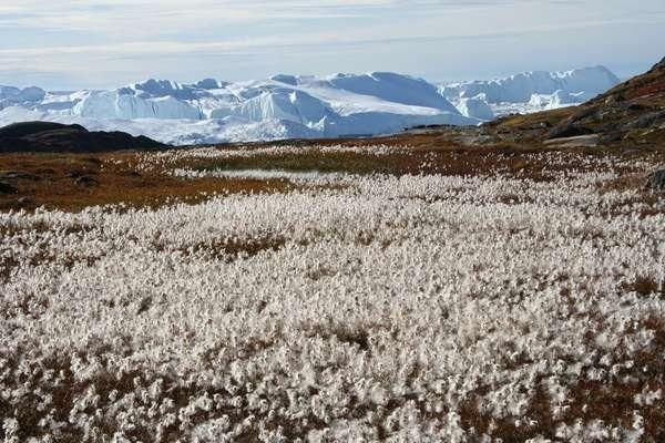 Илиманак, Гренландия