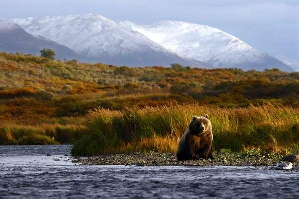 о. Кыска Харбор (Аляска), США