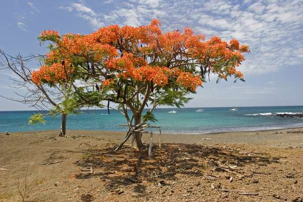 Ultimate Galapagos Explorer with Celebrity Flora