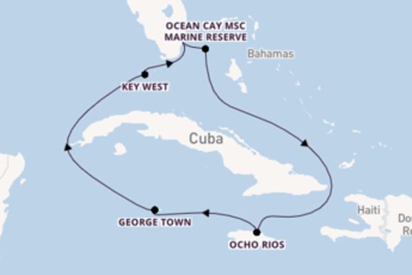 8 day cruise with the MSC Armonia  to Miami