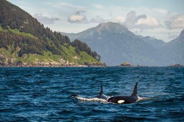 Chankliut Island, Alaska