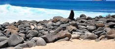 Erlebnis Galapagosinseln