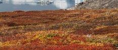 Expeditionsreise um Grönland & Island