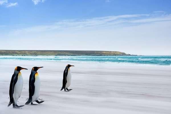 Falkland Islands, British Overseas Territory