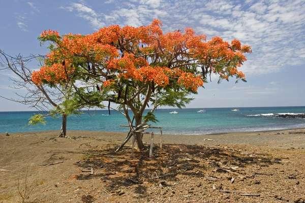 Genießen Sie 8 Tage Punta Moreno (Isabela) und Baltra